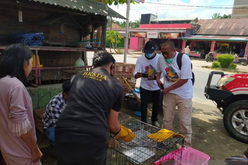Warga Sungai Jariang Agam menyerahkan dua ekor kukang ke BKSDA