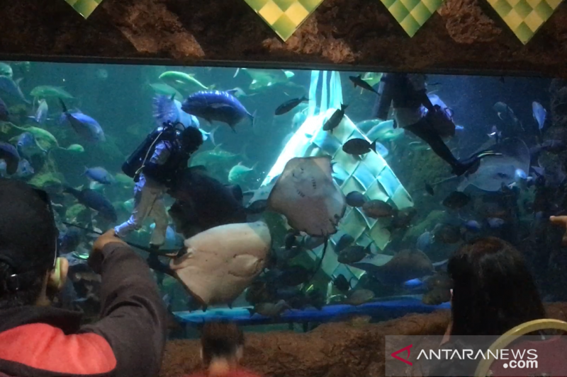 Penghuni Seaworld Ancol habiskan aneka ikan seberat 25 kilogram