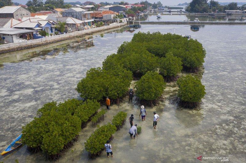 BKSDA Jakarta: Keluarga berperan berikan kesadaran pentingnya mangrove