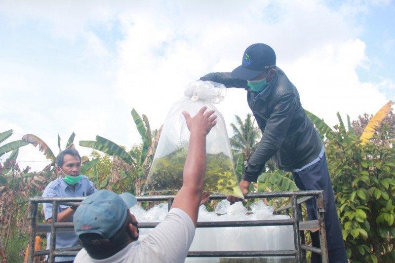 KKP salurkan 350.000 benih ikan air tawar di Kalimantan