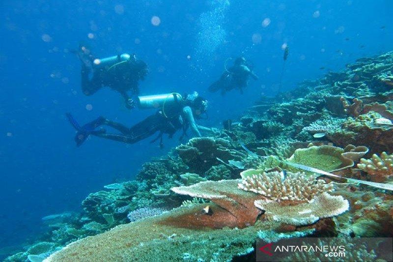 KKP kaji dampak badai Seroja terhadap terumbu karang di TNP Laut Sawu