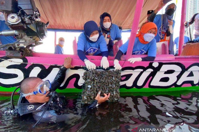 KKP restorasi kerang hijau di Teluk Jakarta untuk jernihkan laut
