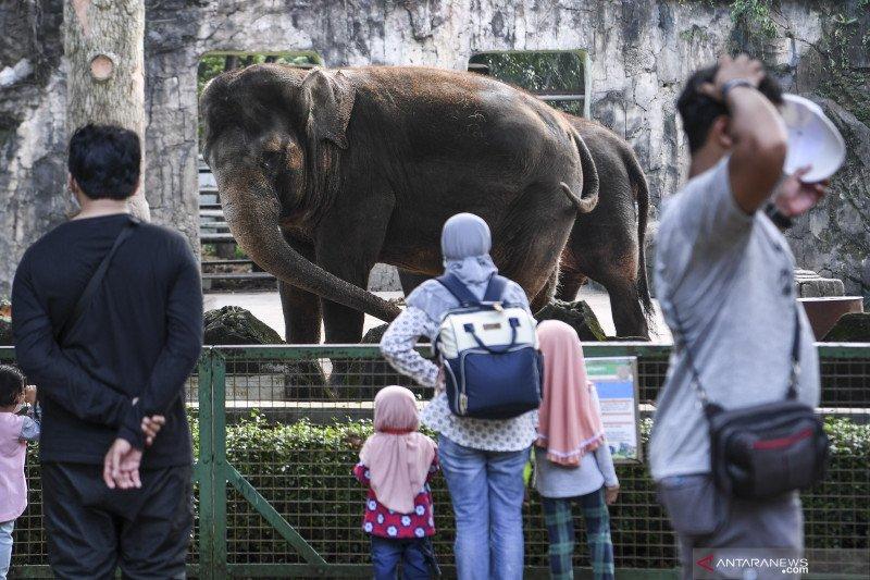 Taman Margasatwa Ragunan batasi kapasitas kunjungan 50 persen