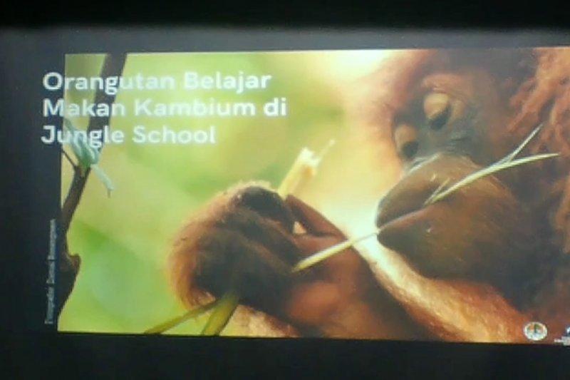 Siti dan Sudin akan bersekolah lima tahun sebelum dilepasliarkan
