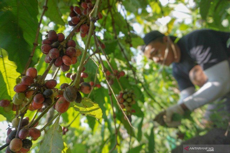 Pemda diminta fokus kembangkan komoditas hortikultura