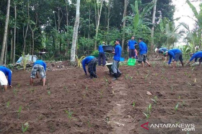 Kelompok tani binaan PLN di Lombok siap ekspor jahe merah