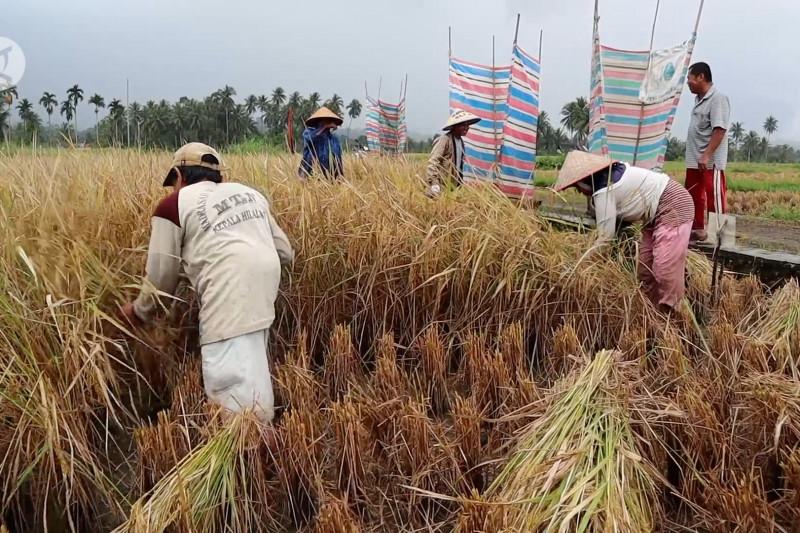 Strategi Sumbar angkat ekonomi pertanian lewat BUMD