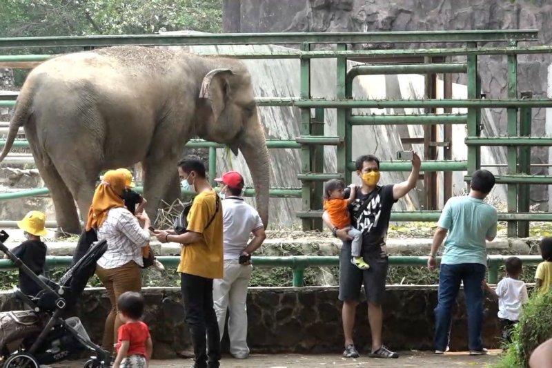 Wajib KTP DKI, 17 ribu pengunjung padati Taman Margasatwa Ragunan