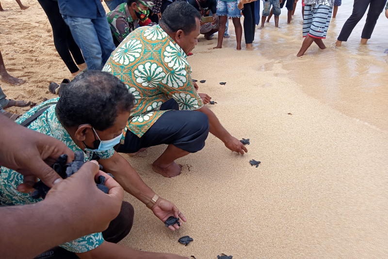Warga adat Raja Ampat sepakat lindungi pantai penetasan telur penyu