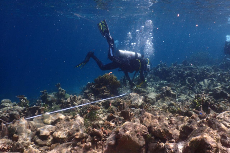 KKP siapkan klaim kerugian terkait rusaknya terumbu karang Raja Ampat