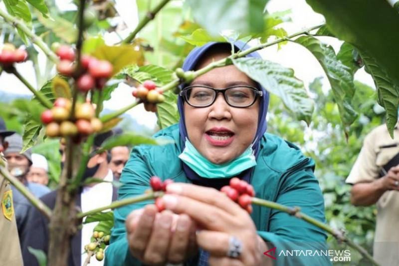 Ade Yasin dorong kopi Bogor jadi produk unggulan di tingkat nasional