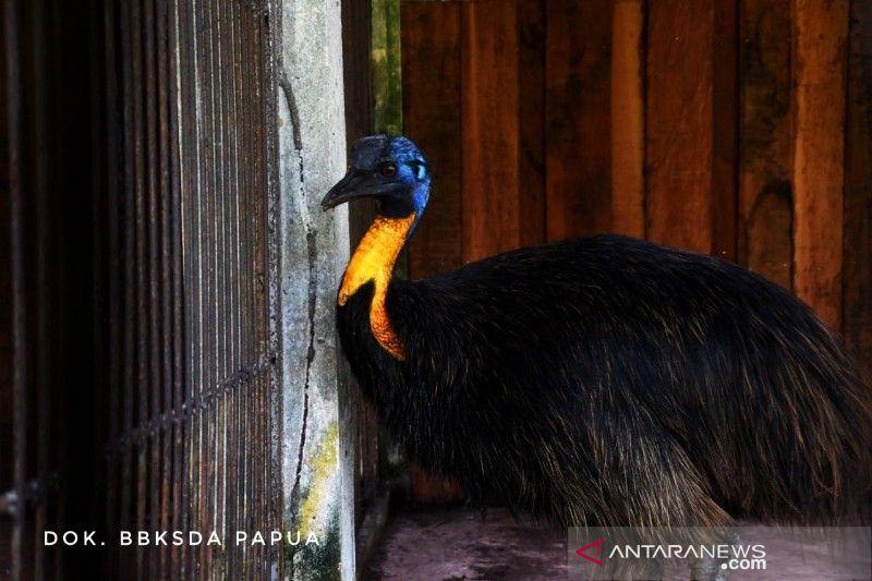 BBKSDA Papua terima 51 satwa dari BKSDA Sulawesi Utara