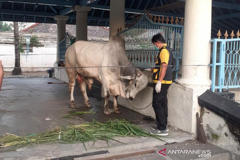 Presiden berkurban dua ekor sapi di dua masjid Kota Solo