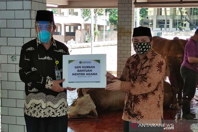 Kemenag serahkan sapi kurban ke pengurus Masjid Istiqlal