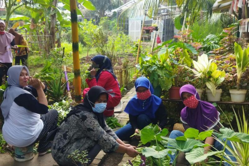 Kelompok Tani Fatmawati panen sayuran hasil pertanian perkotaan