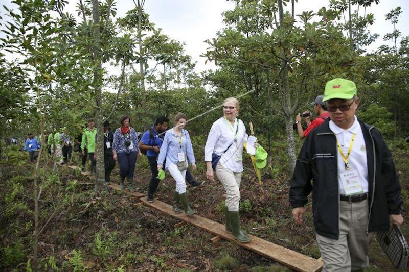 Suaka Margasatwa Padang Sugihan ditanami tumbuhan vegetasi gambut lagi