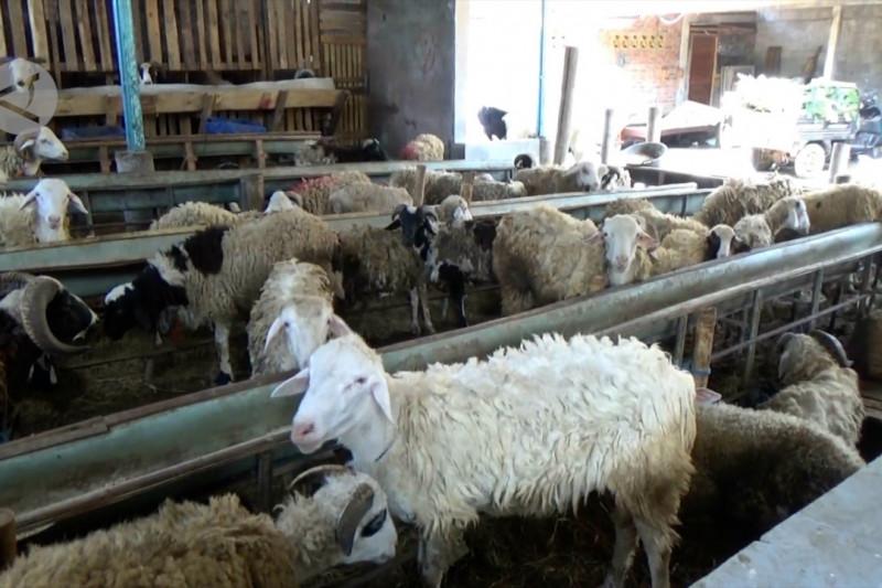 Pemerintah atur pelaksanaan Idul Adha & penyembelihan hewan kurban