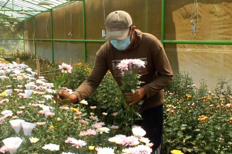 Petani bunga panen permintaan karena tingginya pesanan karangan bunga
