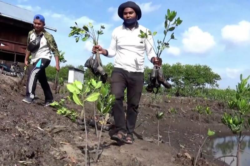 Pegiat lingkungan tanam ratusan mangrove