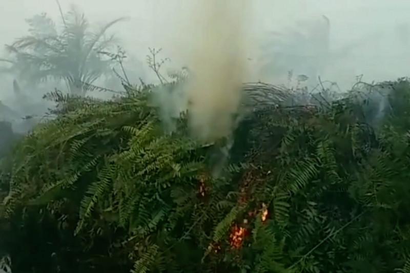 258 desa rawan karhutla, Gubernur Jambi fokus pencegahan dini