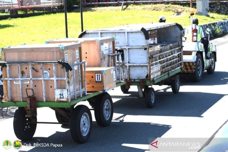 BBKSDA Papua terima translokasi satwa dari Jakarta dan Jogjakarta
