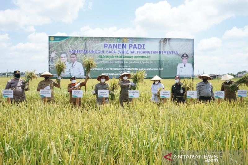 Panen di Kubu Raya, Wamentan harapkan petani milenial terus tumbuh