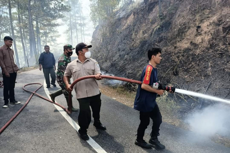 34 hektare hutan pinus-lahan pertanian terbakar di Bener Meriah-Aceh
