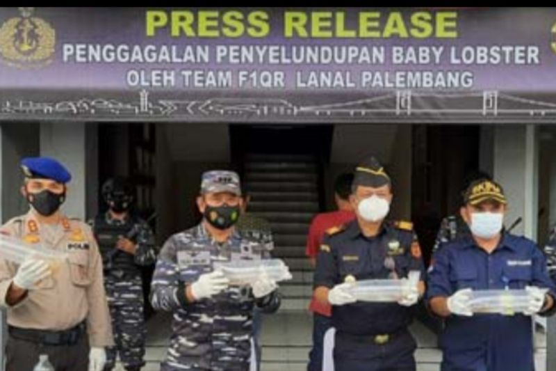 Lanal Palembang gagalkan penyelundupan 55.032 benih lobster