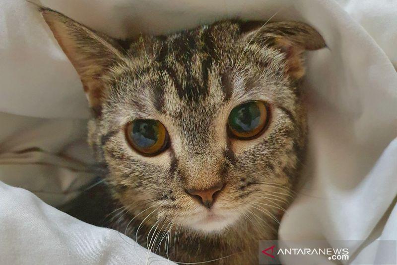 Hari kucing sedunia, ini fakta menarik soal kucing yang perlu kamu tahu