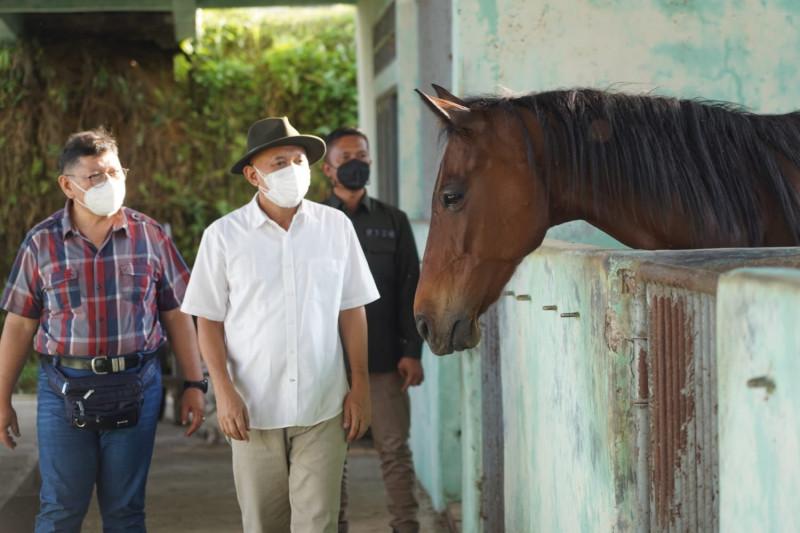 Kemenkop UKM: Tingkatkan kualitas kuda dongkrak kesejahteraan peternak