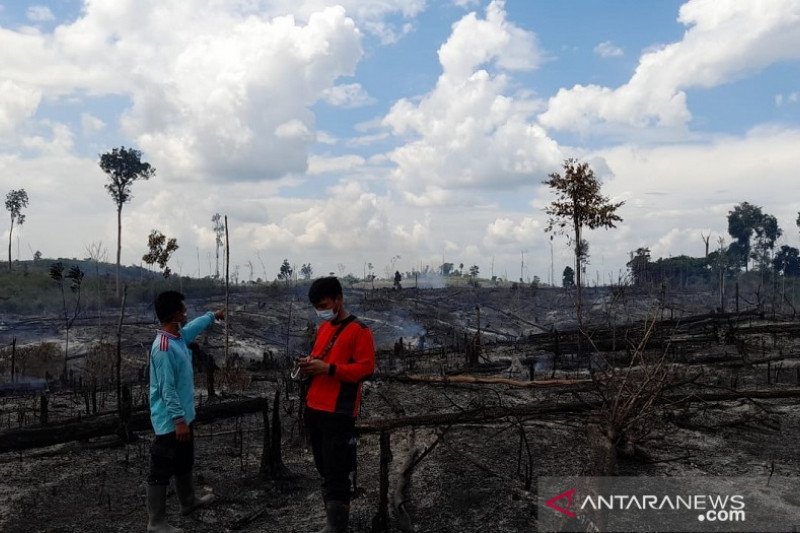 172,9 hektar lahan di Jambi terbakar selama 2021
