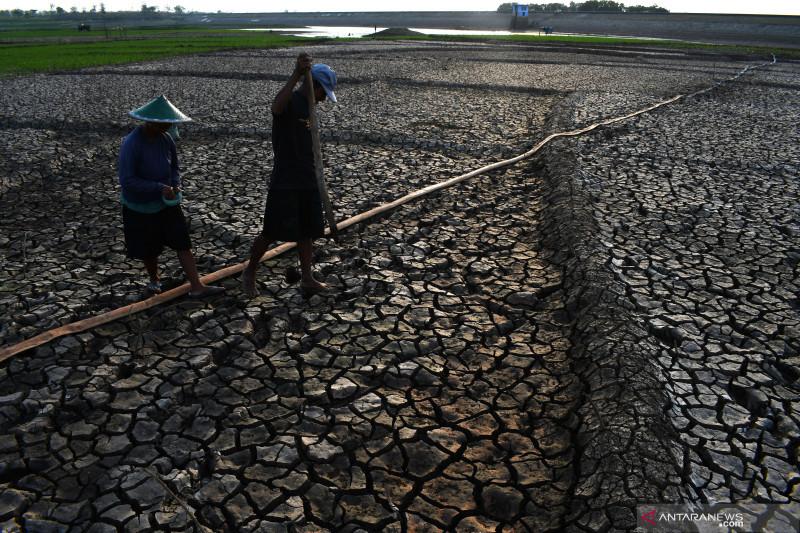 Petani manfaatkan waduk kering untuk bercocok tanam