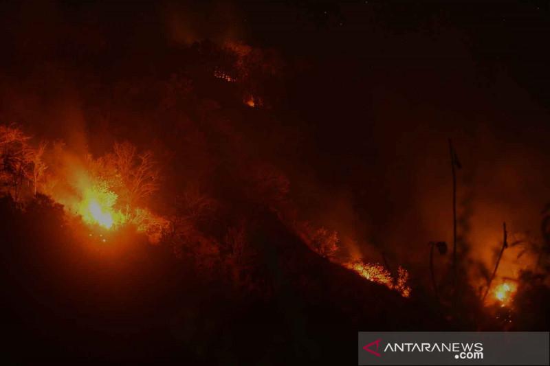 Kebakaran hutan di Situbondo