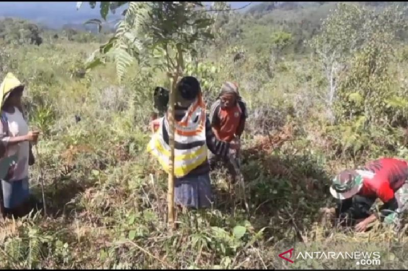 Satgas TNI bersama warga tanam pohon di perbatasan RI-PNG