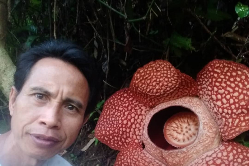 Warga Bengkulu berhasil menangkar Rafflesia arnoldii