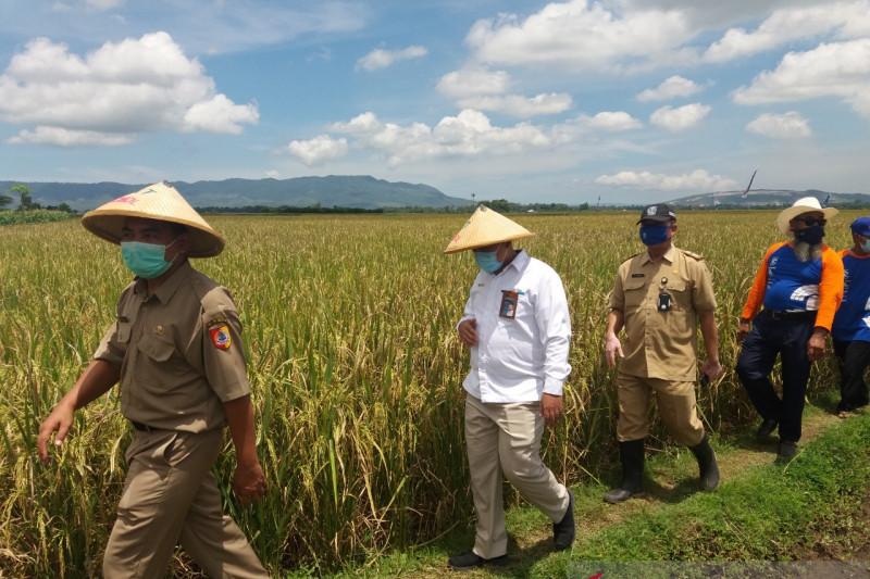 Menilik peran Bulog Jember jaga ketersediaan pangan selama pandemi