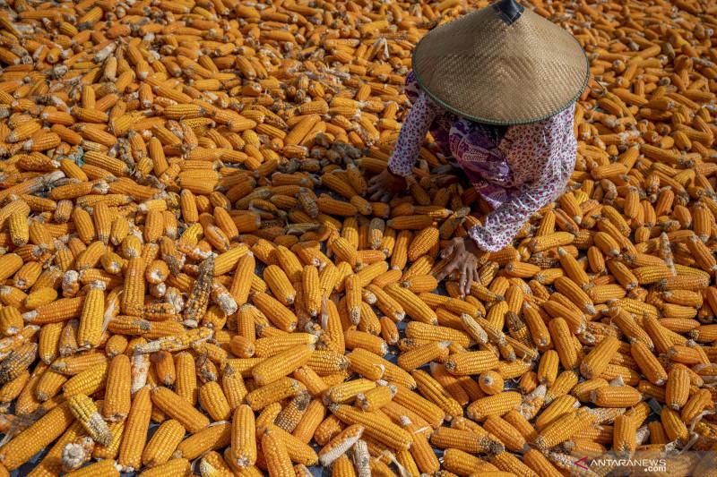 BPS: Indeks harga perdagangan komoditas pertanian stagnan
