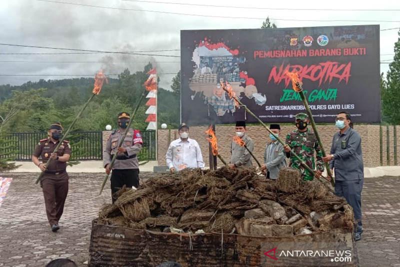 Polres Gayo Lues Aceh memusnahkan 305 kilogram ganja