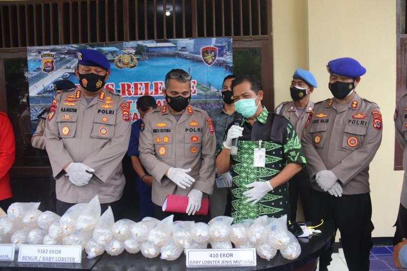 Polda Banten gagalkan penyelundupan 9.382 ekor benih lobster
