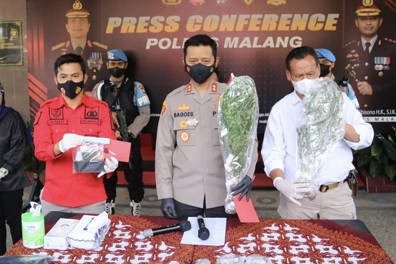 Polisi tangkap pemilik 56 batang tanaman ganja di Malang