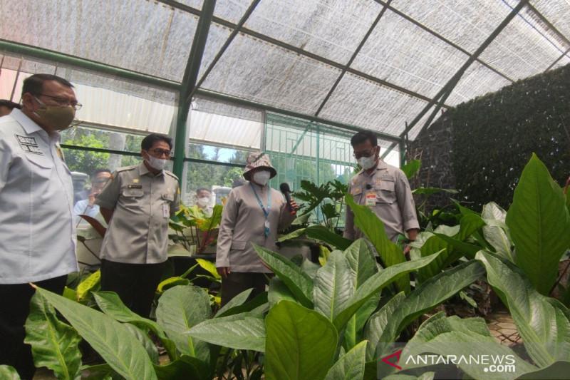 Kementan bagikan 50 ribu bibit tanaman hias ke petani