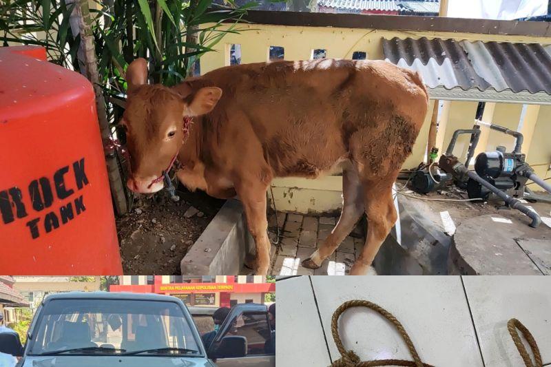 Polres Jember tembak komplotan pencuri hewan ternak