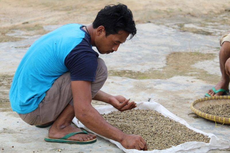 Ekspor kopi naik, petani Lampung harapkan produksi terserap maksimal