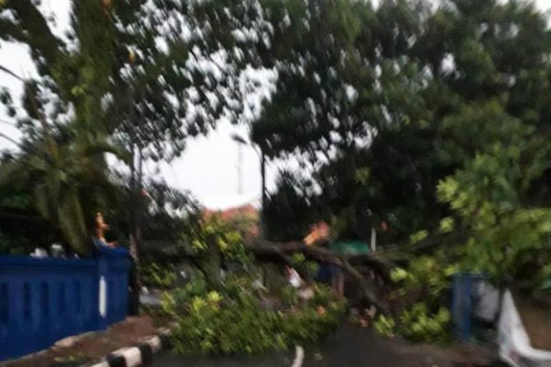 Damkar Depok kerahkan tujuh tim tangani pohon tumbang