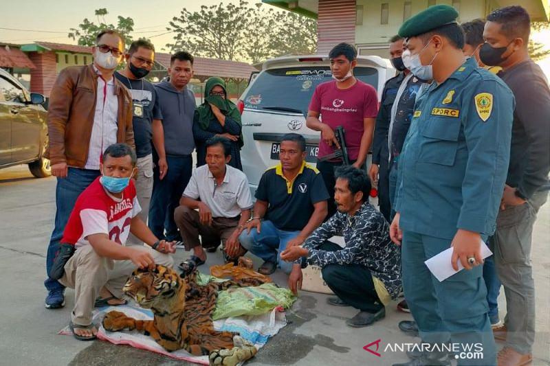Petugas gabungan menangkap penjual kulit harimau di Kampar Riau