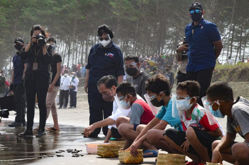 Presiden Joko Widodo lepasliarkan 1.500 ekor tukik di Pantai Kemiren Cilacap
