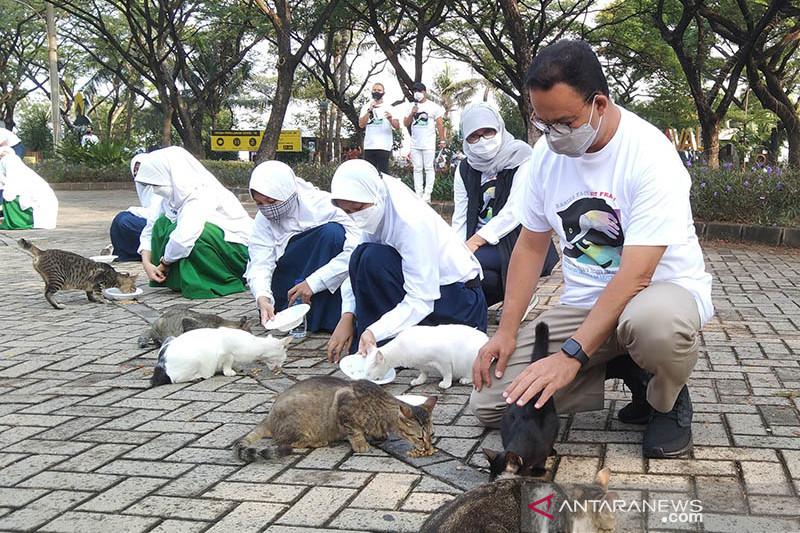 Anies beri makan kucing liar di Ancol peringati Hari Rabies