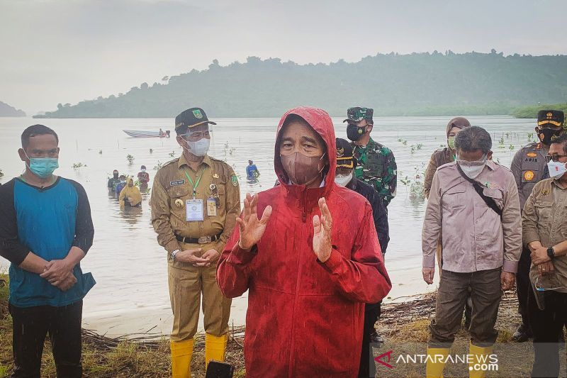 Presiden ingatkan pentingnya merawat mangrove
