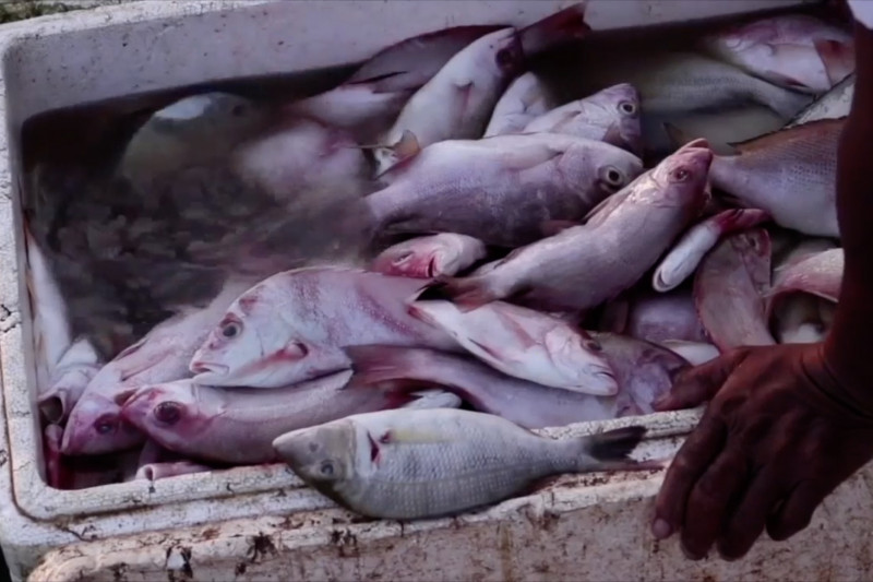 Menteri KP: Penangkapan terukur memudahkan nelayan mencari ikan