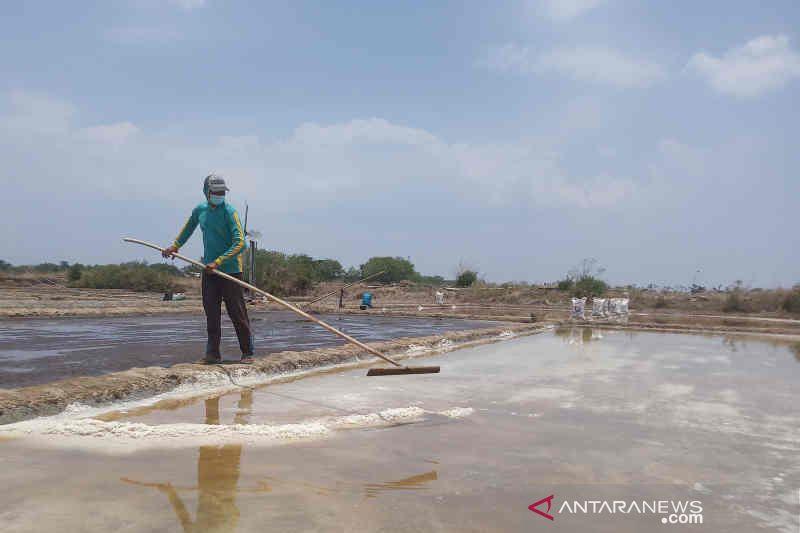 Abrasi sulitkan petambak garam Cirebon berproduksi thumbnail